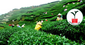 বাংলাদেশ চা বোর্ডে প্রধান কার্যালয়ে নিয়োগ বিজ্ঞপ্তি 2019 Bangladesh tea board
